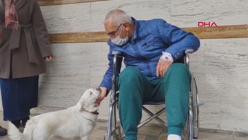 Wierny pies Boncuk. Przychodził przed szpital, w którym był jego właściciel