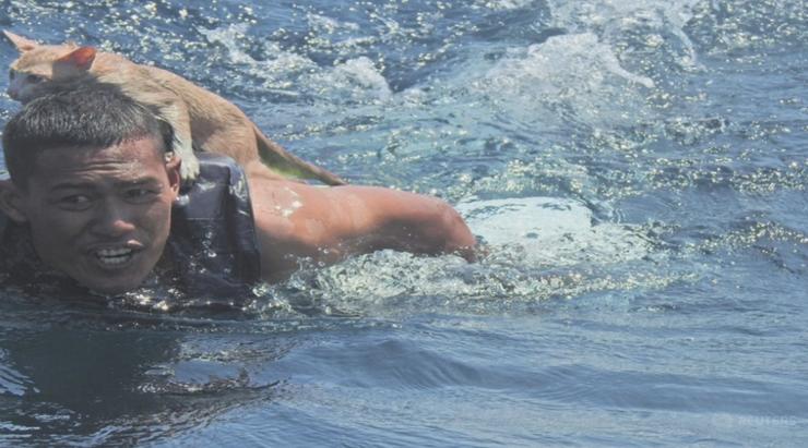 Ryzykowali życie, aby uratować koty z tonącego statku